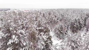 Głęboka zima W Forrest - Powietrzny lot zbiory wideo