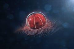 głęboki anthomedusae morze Fotografia Royalty Free