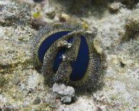 Głęboki Błękitny Denny czesak z Balicasan wyspy, Filipiny Obrazy Stock