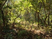 Głęboki las Obraz Royalty Free