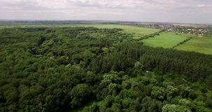 Głęboki las w lato anteny wideo zdjęcie wideo