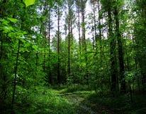 Głęboki las w Perm Obrazy Stock