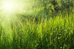 głęboki lasowy światło słoneczne Obrazy Royalty Free