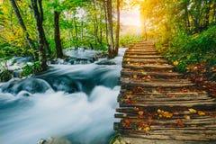 Głęboki lasowy strumień z kryształem - jasna woda z drewniany pahway Plitvice jezior, Chorwacja UNESCO fotografia royalty free