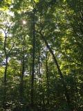 Głęboki lasowy widok Zdjęcie Royalty Free