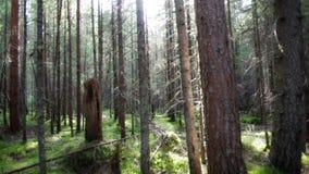 Głęboki rosyjski las zbiory wideo