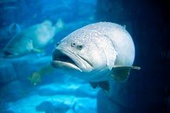 głęboki rybi obiektyw ukierunkowywający morze Obraz Royalty Free