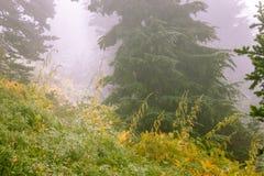 głęboki tajemniczy las przez mgły i dymu obraz royalty free