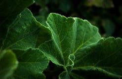 Głęboki - zieleń Opuszcza tło Zdjęcia Royalty Free