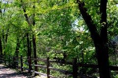 Głęboki - zieleń w lecie Obrazy Stock