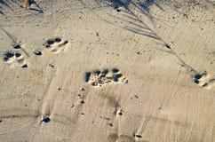 Głębokich odcisków stopy duży pies na piaskowatym brzeg Zdjęcia Stock