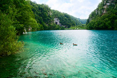 głębokie jezioro forest zdjęcie stock