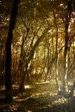 głębokie las Zdjęcia Stock