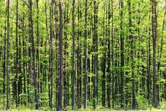 głębokie las Obraz Stock