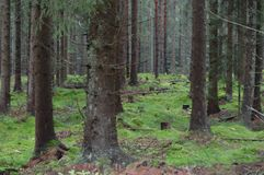 głębokie lasu Obrazy Stock
