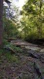 głębokie lasu Zdjęcie Royalty Free