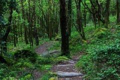 głębokie lasu Zdjęcie Stock