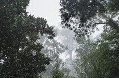 Głębokie Południe Mgłowy las obrazy royalty free