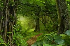 Głębokie tropikalne dżungle Zdjęcia Royalty Free