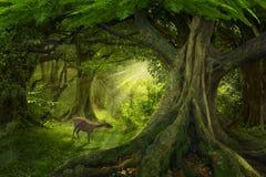 Głębokie tropikalne dżungle Azja Południowo-Wschodnia w august Fotografia Stock