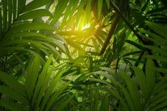 Głębokie tropikalne dżungle Azja Południowo-Wschodnia w august Obraz Stock
