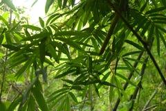 Głębokie tropikalne dżungle Azja Południowo-Wschodnia w august Zdjęcia Royalty Free