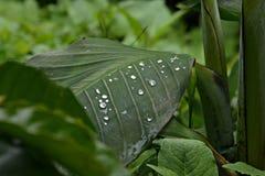 głębokość kropli deszczu pola krótkiego liści Obraz Royalty Free