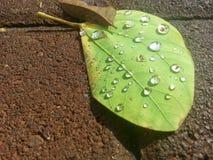głębokość kropli deszczu pola krótkiego liści Obraz Stock