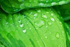 głębokość kropli deszczu pola krótkiego liści Zdjęcie Stock