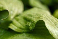 głębokość kropli deszczu pola krótkiego liści Fotografia Stock