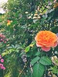 głębokość pola kwiatów krótkie lata wcześniej Fotografia Stock