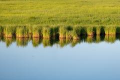 Gładka wody powierzchnia z trawy odbiciem zdjęcie royalty free