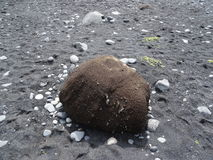Głaz lawy plaża Fotografia Royalty Free