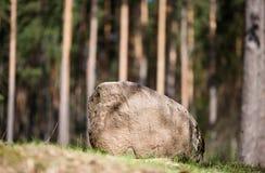 Głaz na krawędzi lasu Fotografia Royalty Free