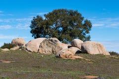 Głaz obwódki drzewo Przy Ramona obszarów trawiastych prezerwą Obraz Stock