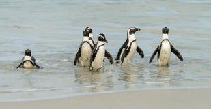 Głaz plaża w Simonstown Południowa Afryka z pingwinami Zdjęcie Stock