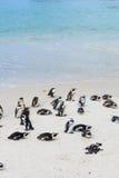Głazy Wyrzucać na brzeg, pingwin kolonie, Kapsztad Obraz Stock