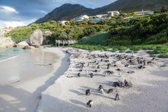Głazy Wyrzucać na brzeg Zachodniego przylądek - Południowa Afryka - pingwin kolonia - Obrazy Stock