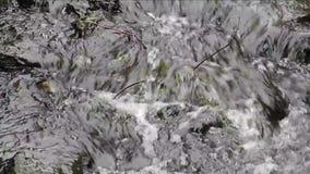 Głośny pluskocze strumyk z dużymi kamieniami zbiory wideo