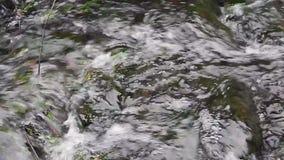 Głośny pluskocze strumyk z dużymi kamieniami zbiory