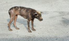 Głodny i choroba pies obraz stock