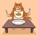 Głodny kot chce jeść Zdjęcie Royalty Free