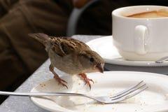 Głodny mały wróbel Zdjęcia Royalty Free