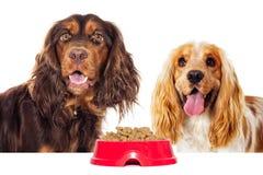 Głodny pies i suchy jedzenie obrazy stock