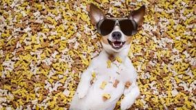 Głodny pies w dużym karmowym kopu Zdjęcia Royalty Free