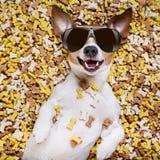 Głodny pies w dużym karmowym kopu Zdjęcie Royalty Free