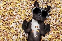 Głodny pies w dużym karmowym kopu Obrazy Royalty Free