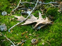 głos określa las obrazy royalty free