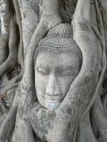 głowę buddy korzeni drzewa stone otoczony Obraz Royalty Free