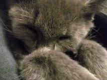 głowa śpiący fotografia stock